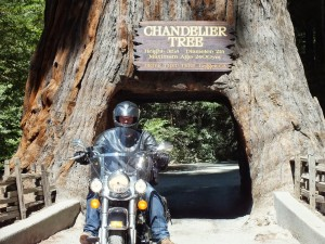 Motorcycle Riding through the Chandelier Tree